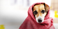Pet Health Tips | Lybrate.com